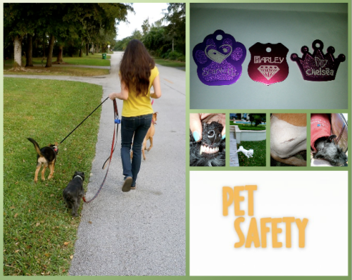 pet safety website tips