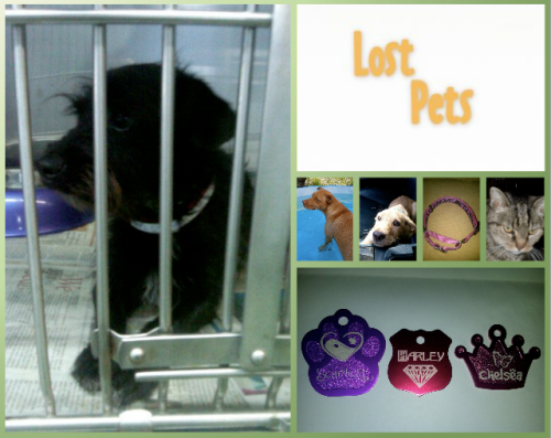 lost pets website
