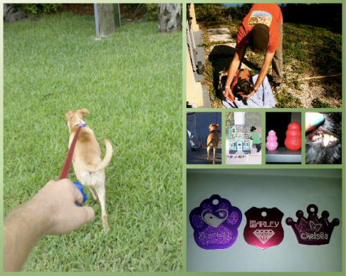 responsible pet ownership website