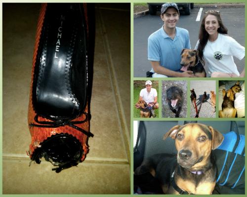 dog training tips website