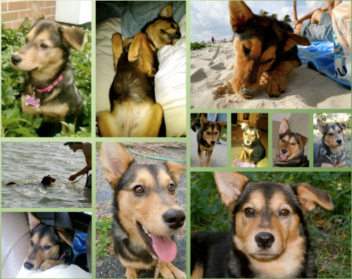 dog collage