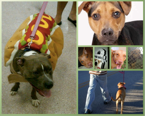 bsl pit bull causes
