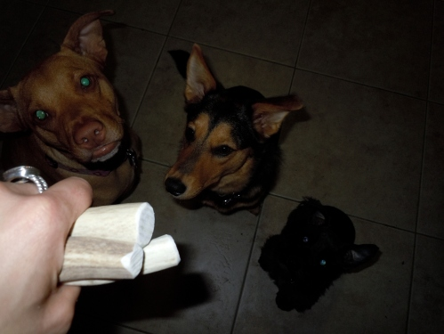 dogs, bones, puppies