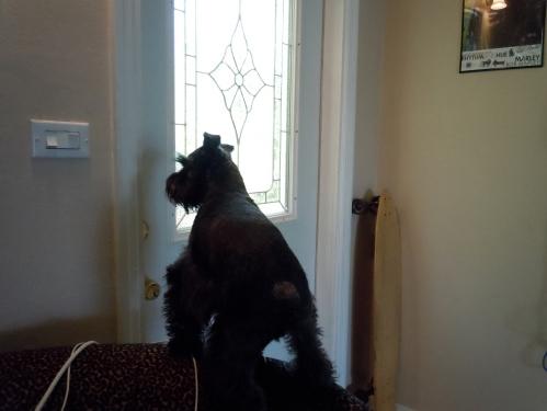 dog, dog waiting by door