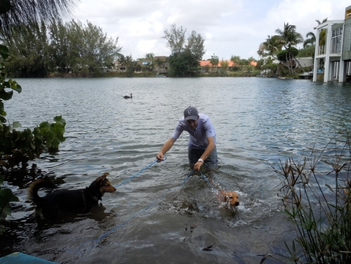 lake dog, dogs