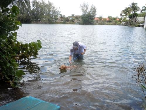 dog lake, lake, dogs