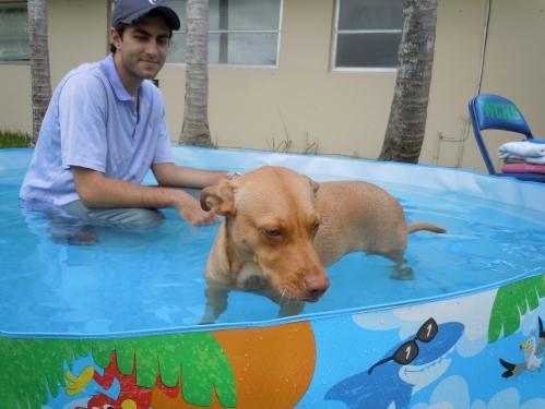 pool, dog, dog in pool