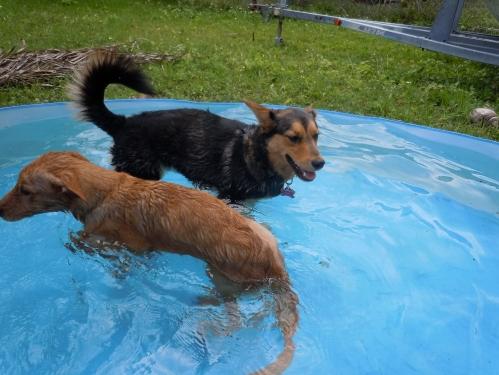 fho surgery, fho rehabilitation dog, dogs
