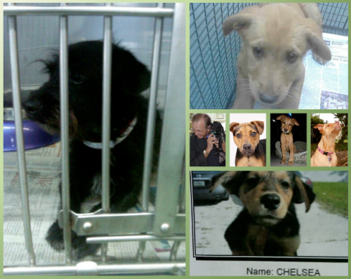 stop animal cruelty banner