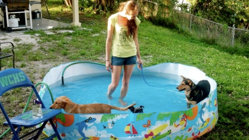 pool, dogs, dog pool