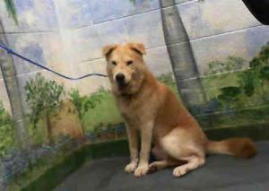 shelter dog miami