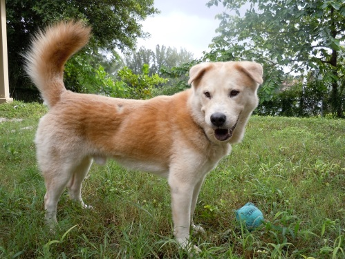 shelter dog rescued