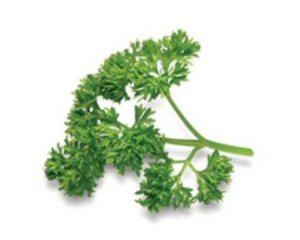 parsley good for dogs