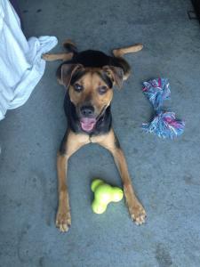 tux toy, dog