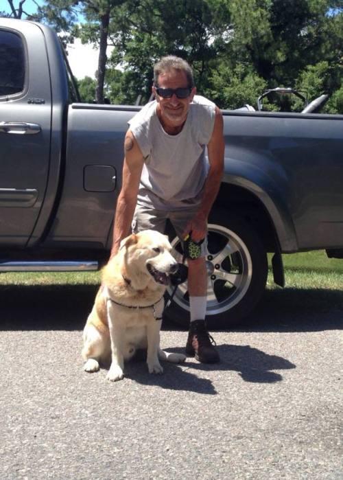 foster dog, dog adoption