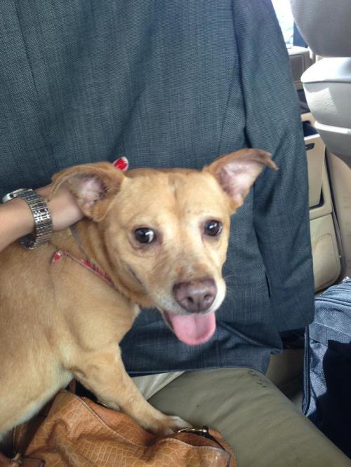 Foster Pup Lucky Boy