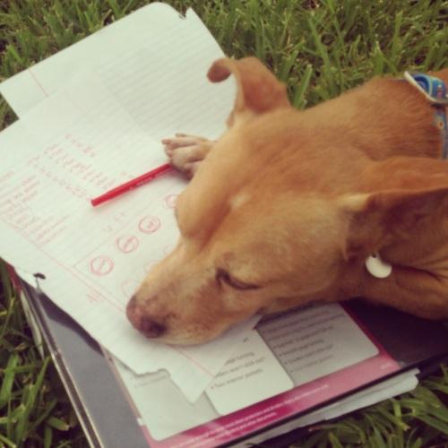foster dog, rescue dog