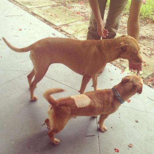 dog and mini-me